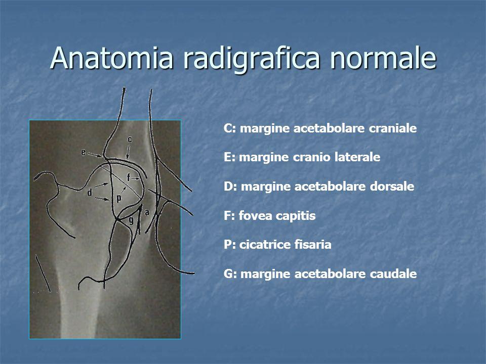 Anatomia radigrafica normale