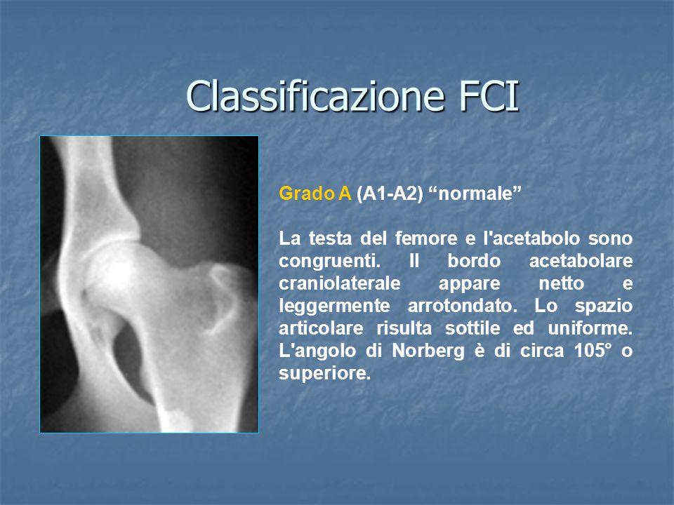 Classificazione FCI Grado A (A1-A2) normale