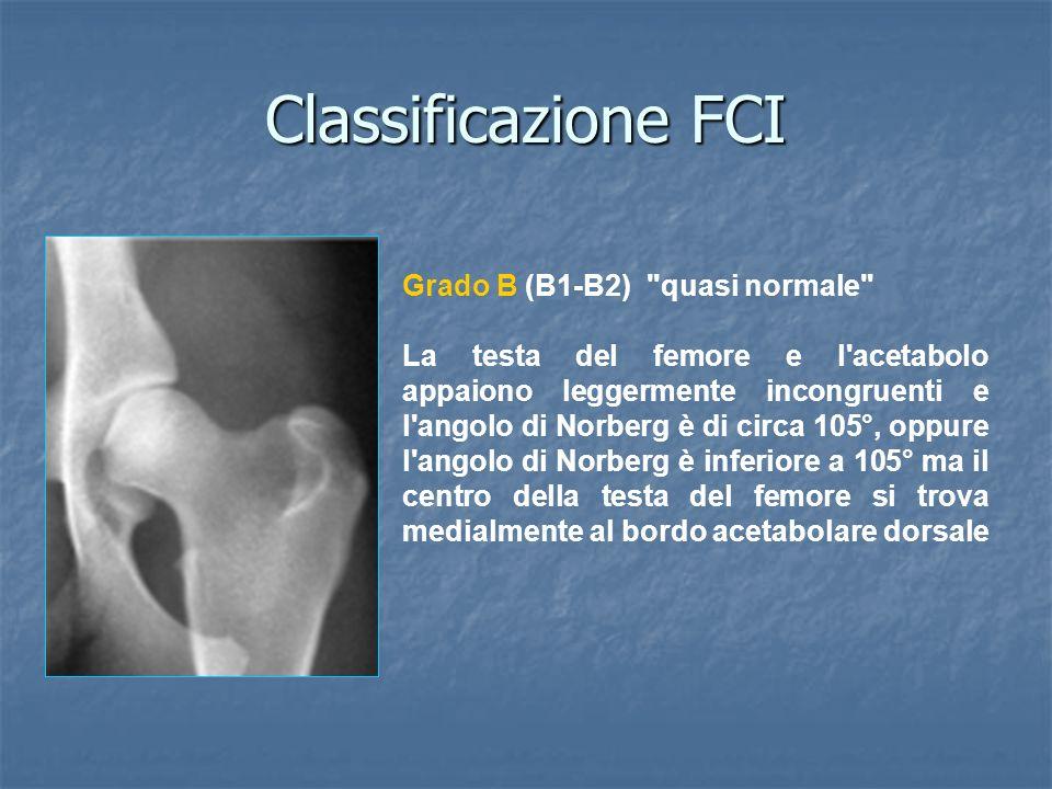 Classificazione FCI Grado B (B1-B2) quasi normale