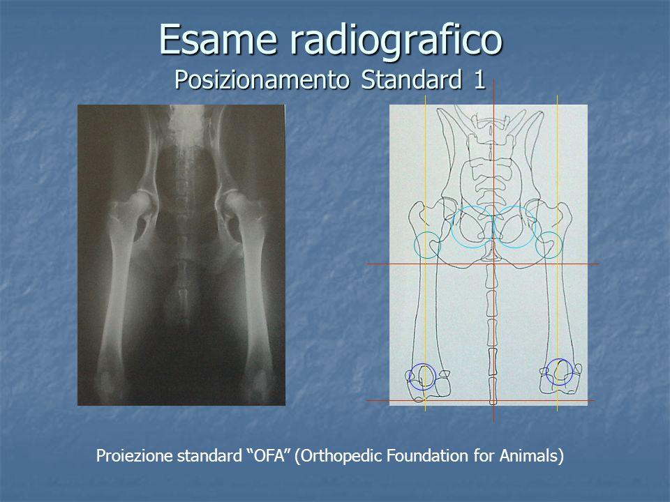 Esame radiografico Posizionamento Standard 1