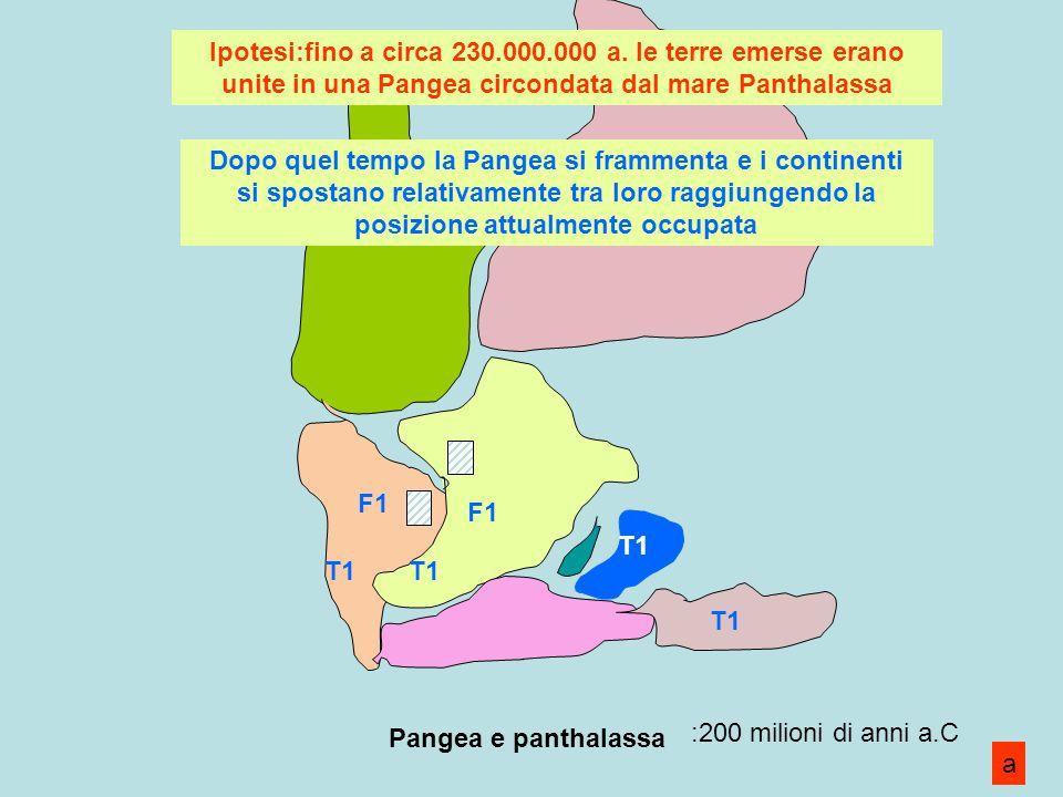 Ipotesi:fino a circa 230.000.000 a. le terre emerse erano unite in una Pangea circondata dal mare Panthalassa