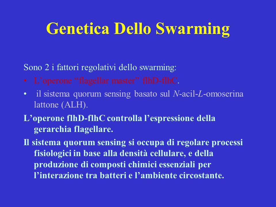 Genetica Dello Swarming