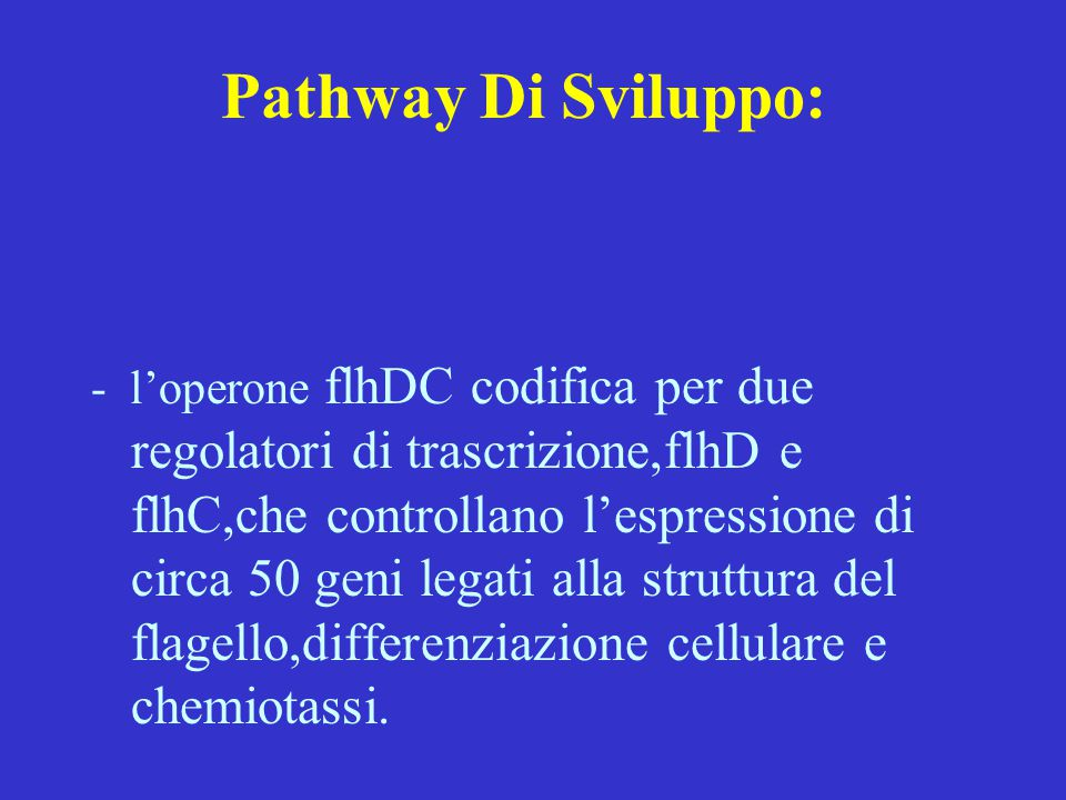 Pathway Di Sviluppo: