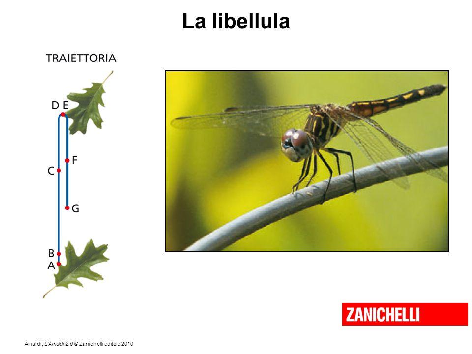 La libellula Come è fatta la traiettoria della libellula