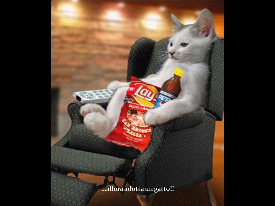 …allora adotta un gatto!!