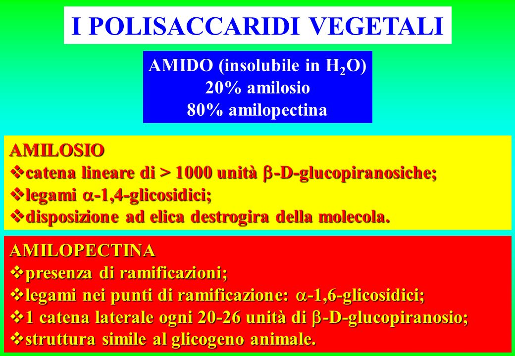 I POLISACCARIDI VEGETALI AMIDO (insolubile in H2O)