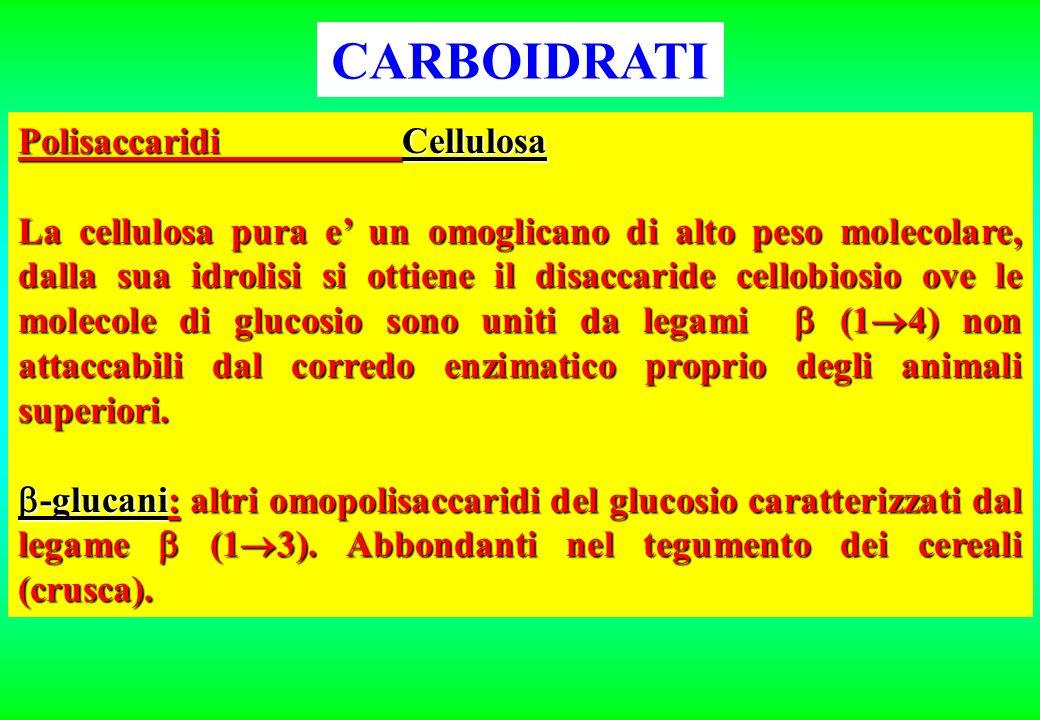 CARBOIDRATI Polisaccaridi Cellulosa