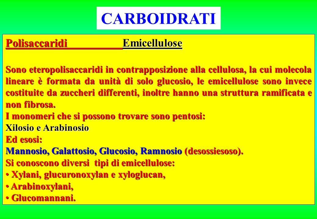 CARBOIDRATI Polisaccaridi Emicellulose