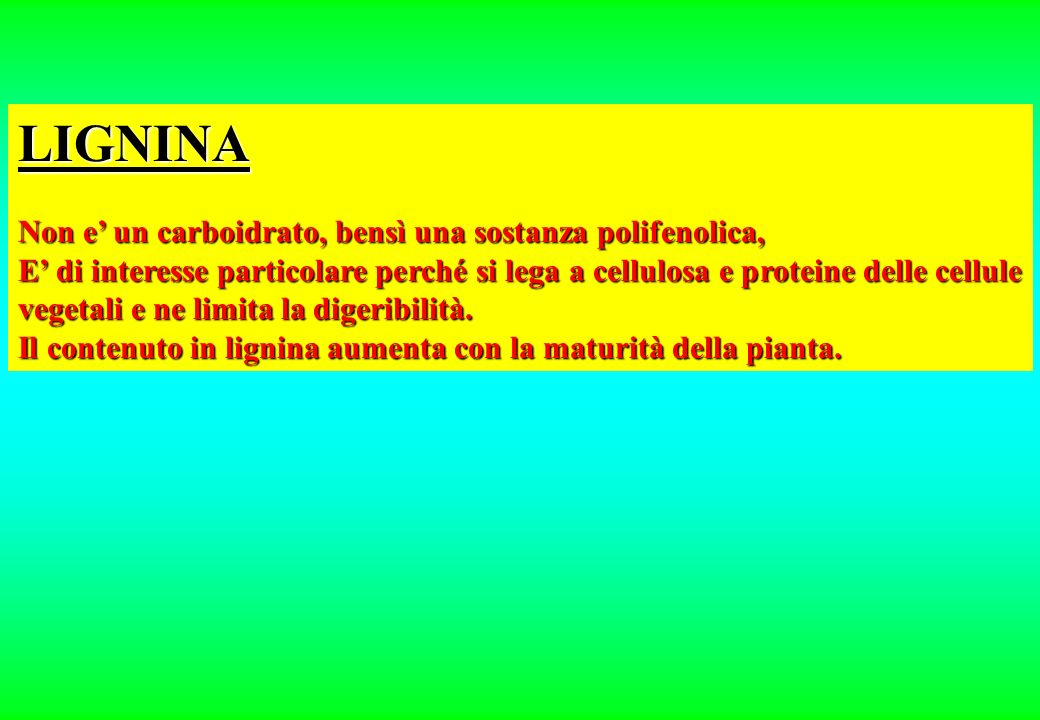 LIGNINA Non e' un carboidrato, bensì una sostanza polifenolica,