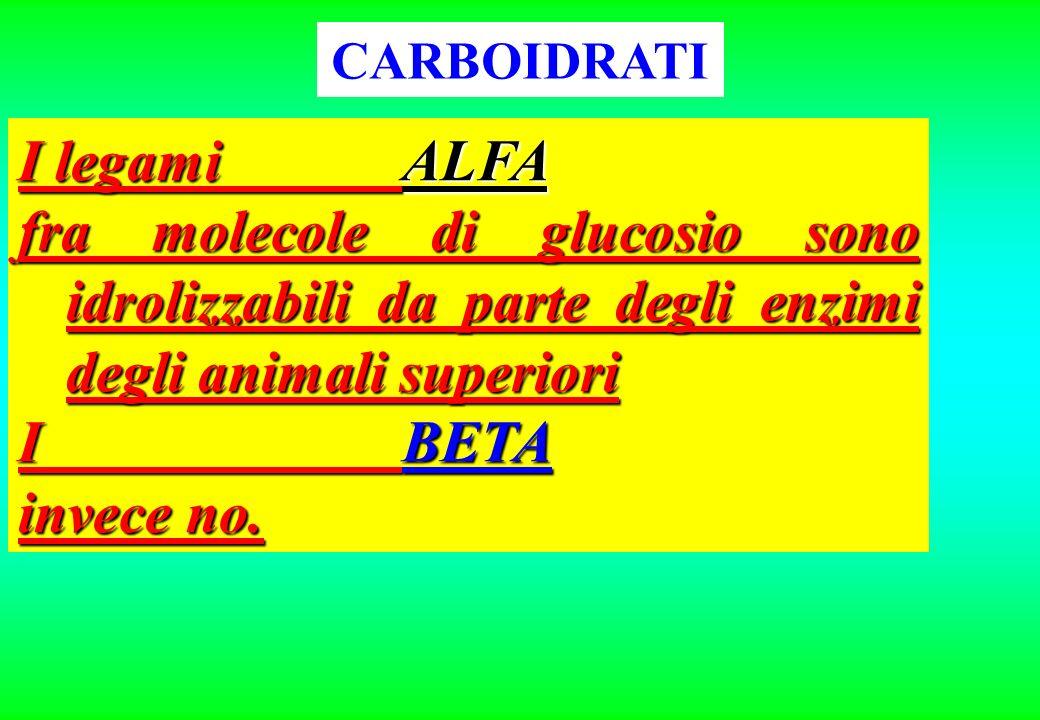 CARBOIDRATI I legami ALFA. fra molecole di glucosio sono idrolizzabili da parte degli enzimi degli animali superiori.