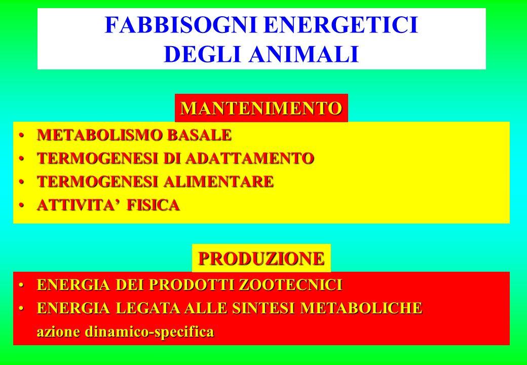 FABBISOGNI ENERGETICI DEGLI ANIMALI