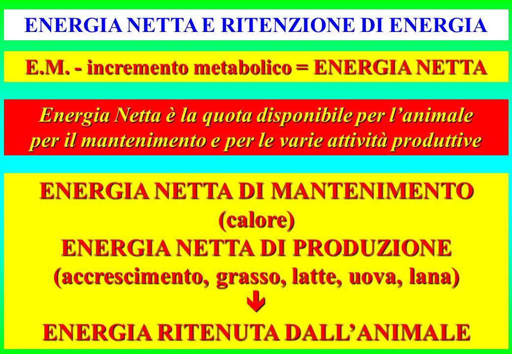 ENERGIA NETTA DI MANTENIMENTO (calore) ENERGIA NETTA DI PRODUZIONE