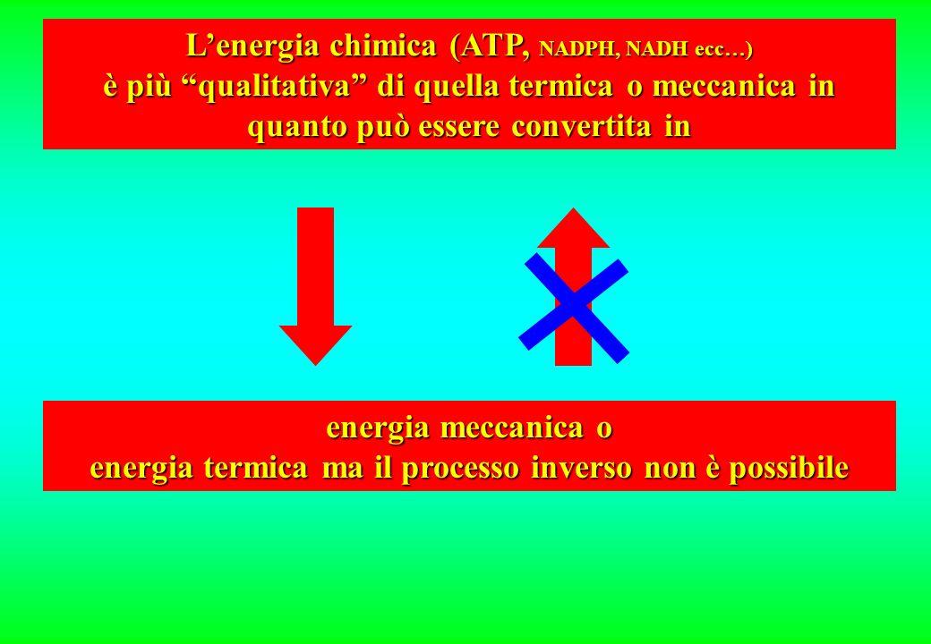 L'energia chimica (ATP, NADPH, NADH ecc…)