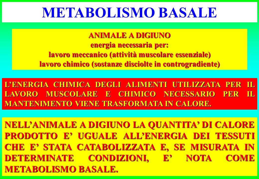 METABOLISMO BASALE ANIMALE A DIGIUNO. energia necessaria per: lavoro meccanico (attività muscolare essenziale)