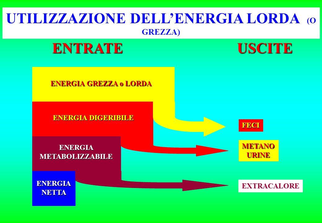 UTILIZZAZIONE DELL'ENERGIA LORDA (O GREZZA)