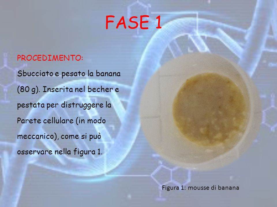 FASE 1