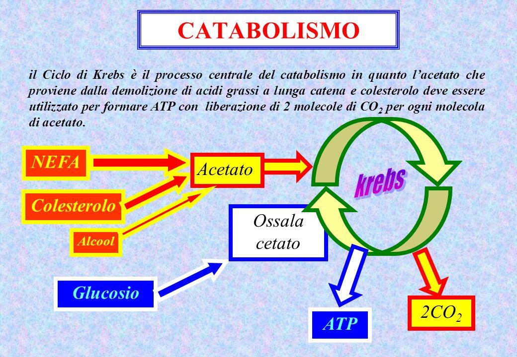 CATABOLISMO krebs NEFA Acetato Colesterolo Ossala cetato Glucosio 2CO2