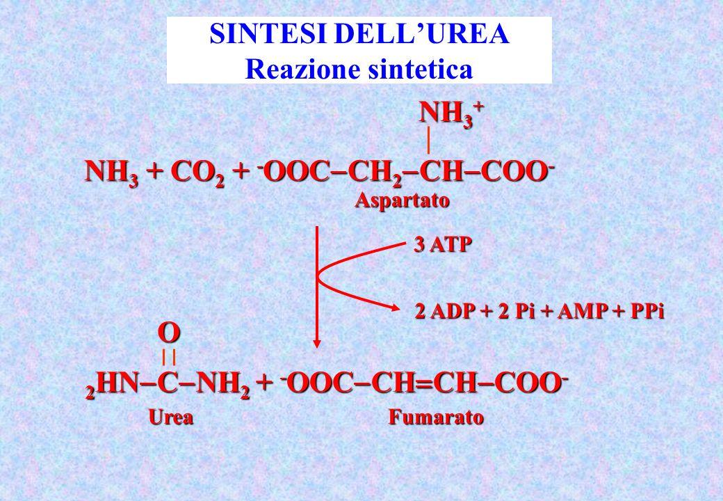 SINTESI DELL'UREA Reazione sintetica