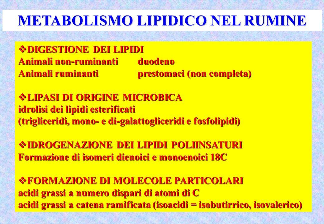 METABOLISMO LIPIDICO NEL RUMINE