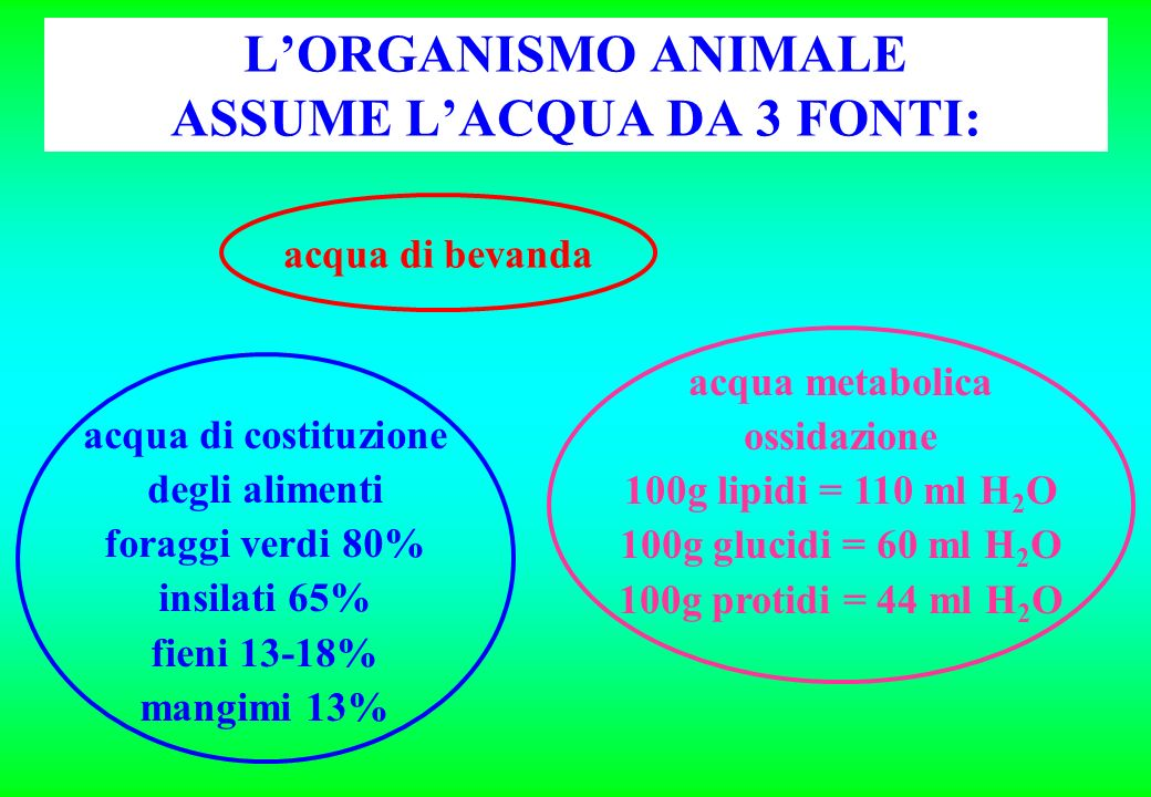 L'ORGANISMO ANIMALE ASSUME L'ACQUA DA 3 FONTI: