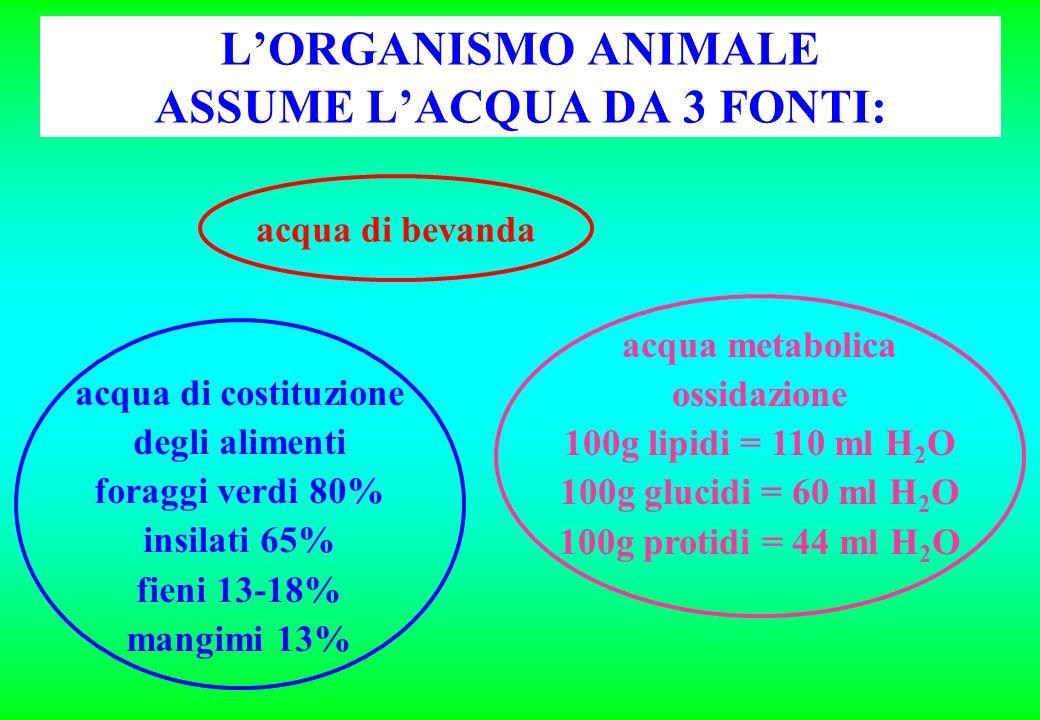 L'ORGANISMO ANIMALE ASSUME L'ACQUA DA 3 FONTI: