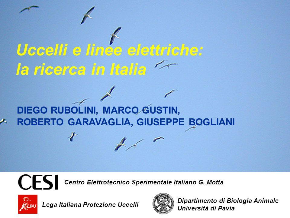 Uccelli e linee elettriche: la ricerca in Italia