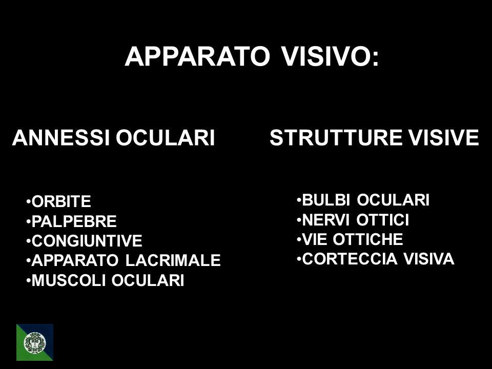 ANNESSI OCULARI STRUTTURE VISIVE