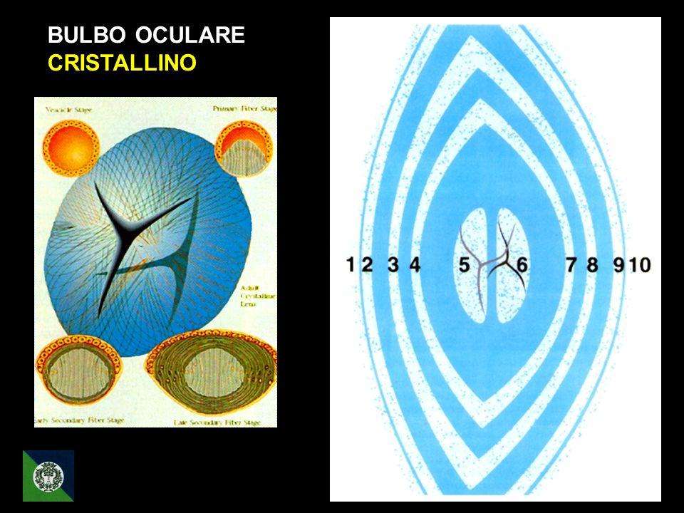 BULBO OCULARE CRISTALLINO