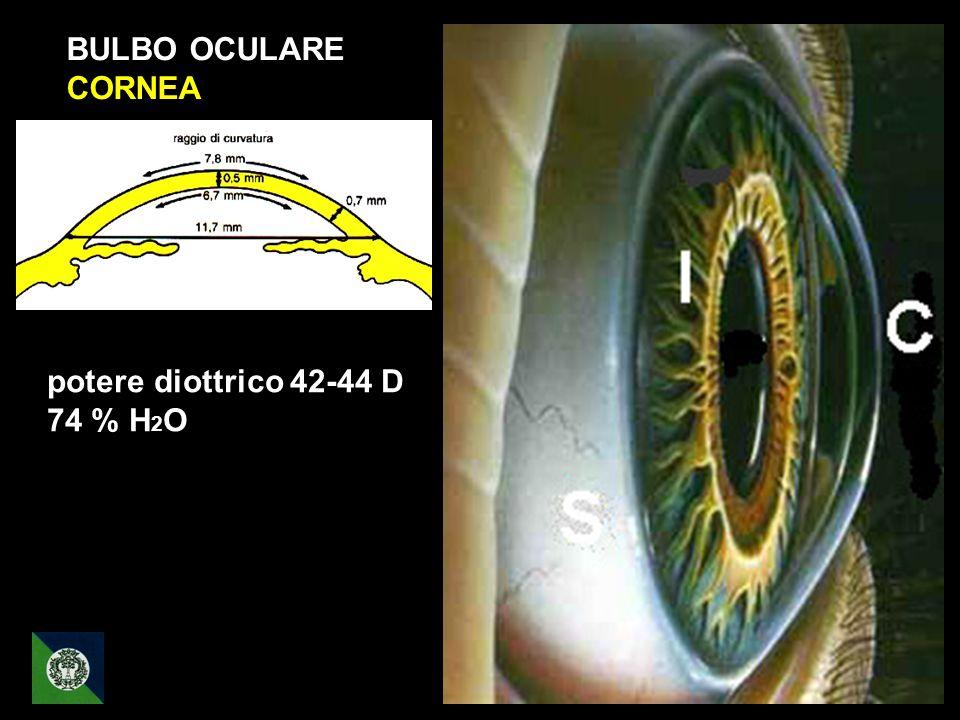 BULBO OCULARE CORNEA potere diottrico 42-44 D 74 % H2O