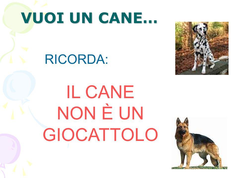 VUOI UN CANE… RICORDA: IL CANE NON È UN GIOCATTOLO