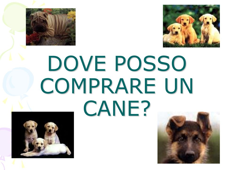 DOVE POSSO COMPRARE UN CANE