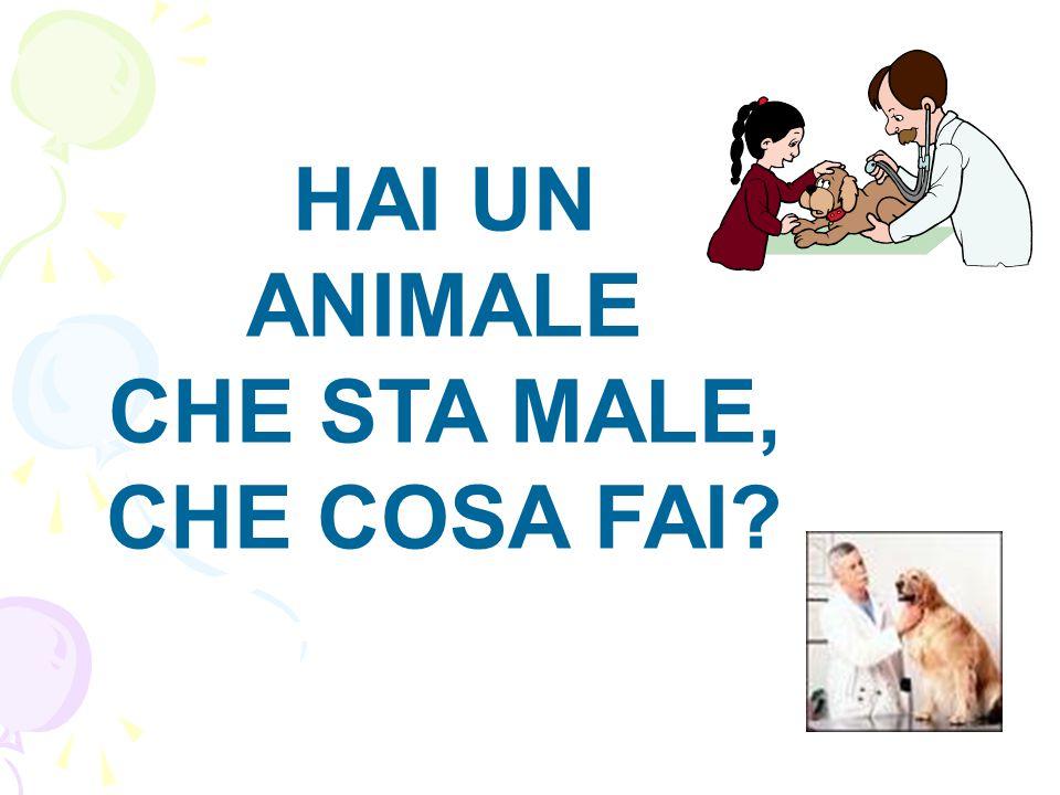 HAI UN ANIMALE CHE STA MALE, CHE COSA FAI