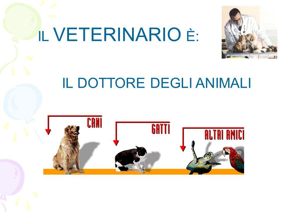 IL VETERINARIO È: IL DOTTORE DEGLI ANIMALI