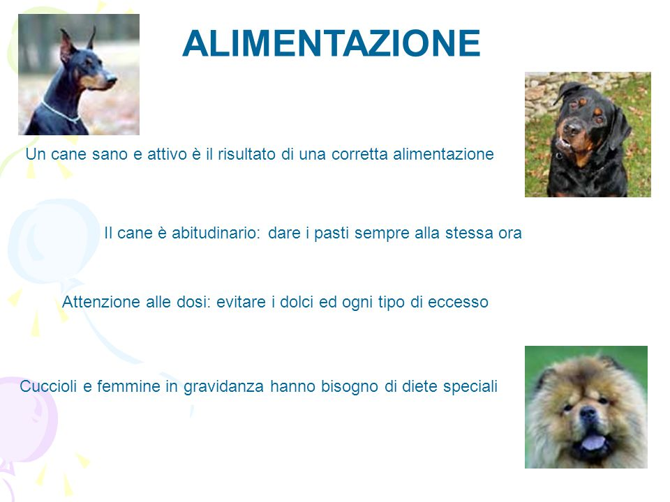 ALIMENTAZIONE Un cane sano e attivo è il risultato di una corretta alimentazione. Il cane è abitudinario: dare i pasti sempre alla stessa ora.