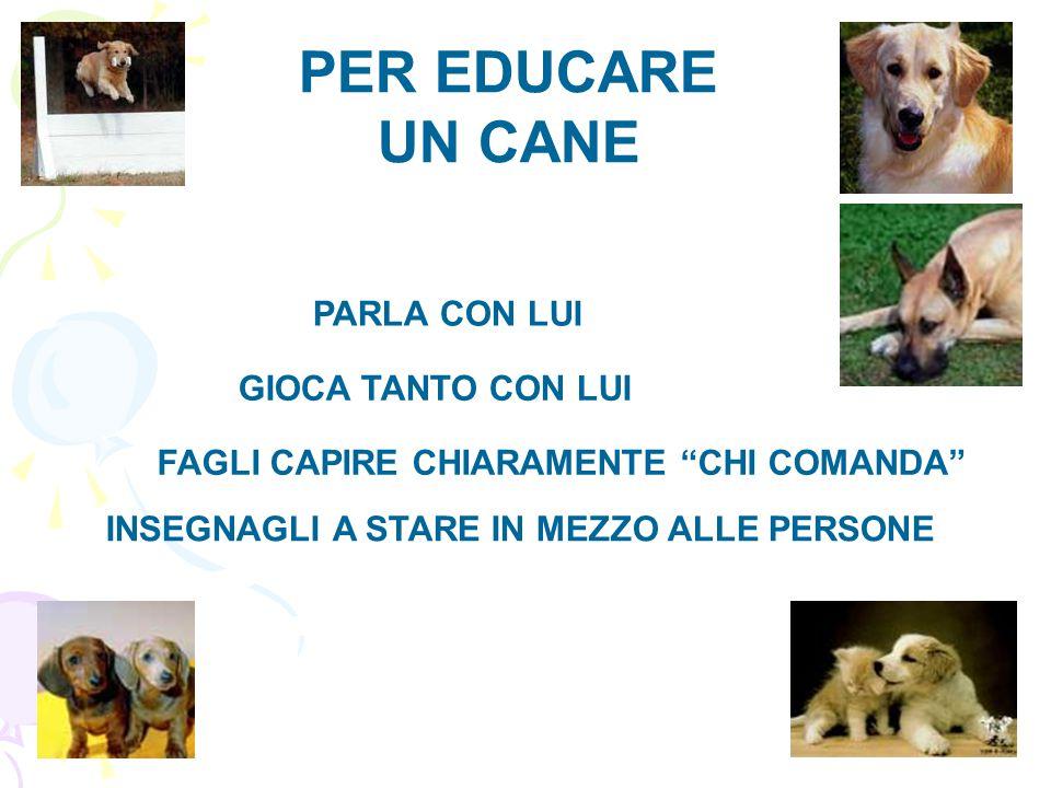 PER EDUCARE UN CANE PARLA CON LUI GIOCA TANTO CON LUI