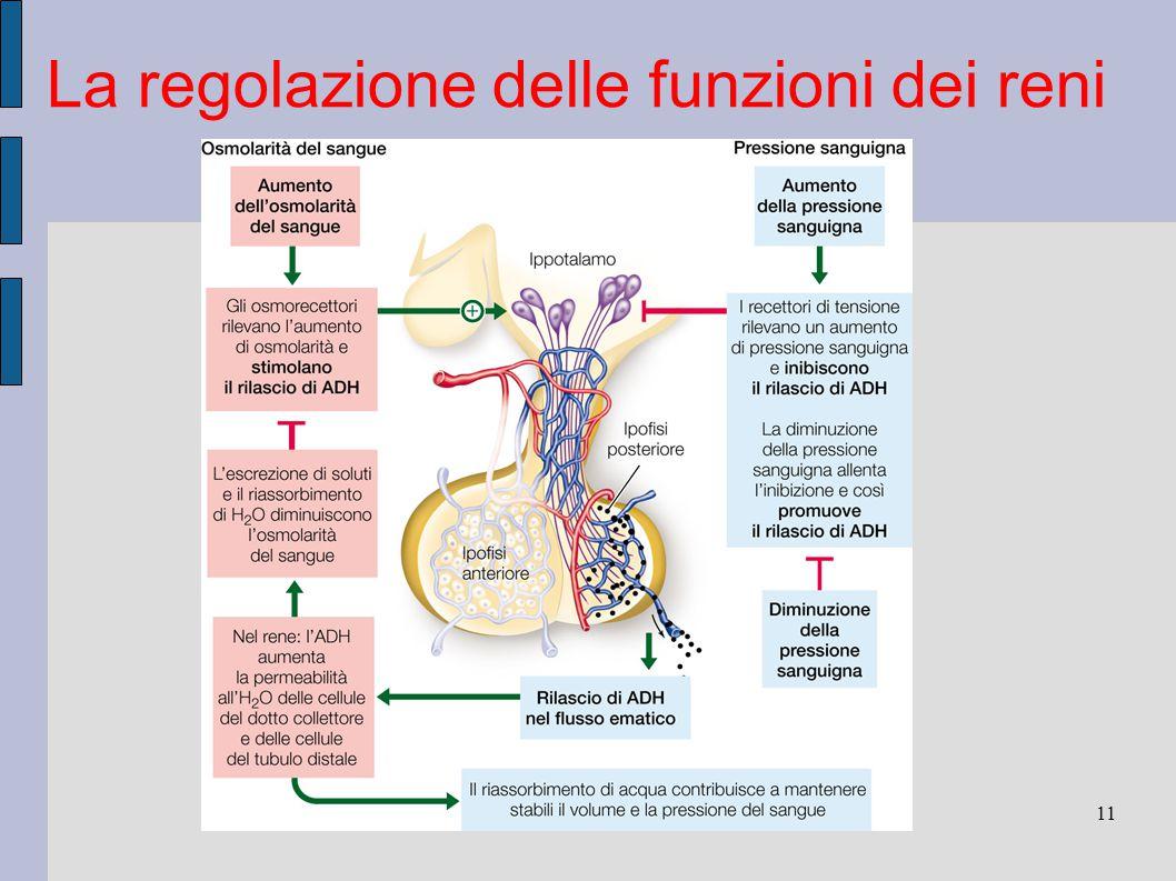La regolazione delle funzioni dei reni