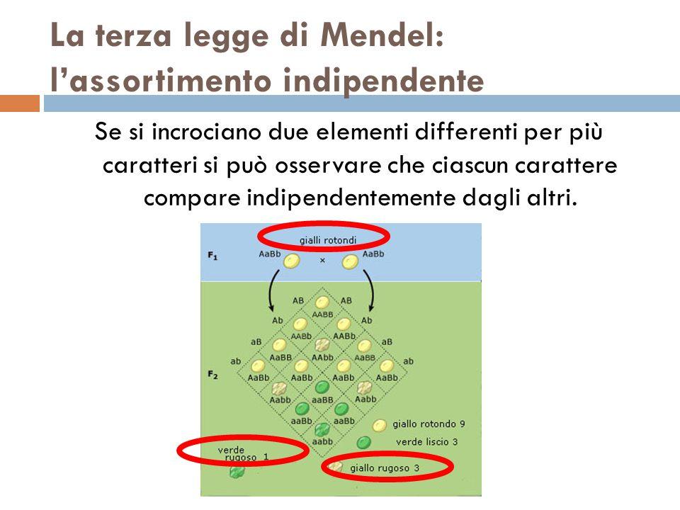 La terza legge di Mendel: l'assortimento indipendente