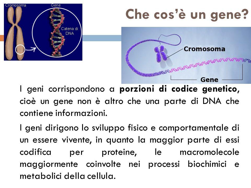 Che cos'è un gene