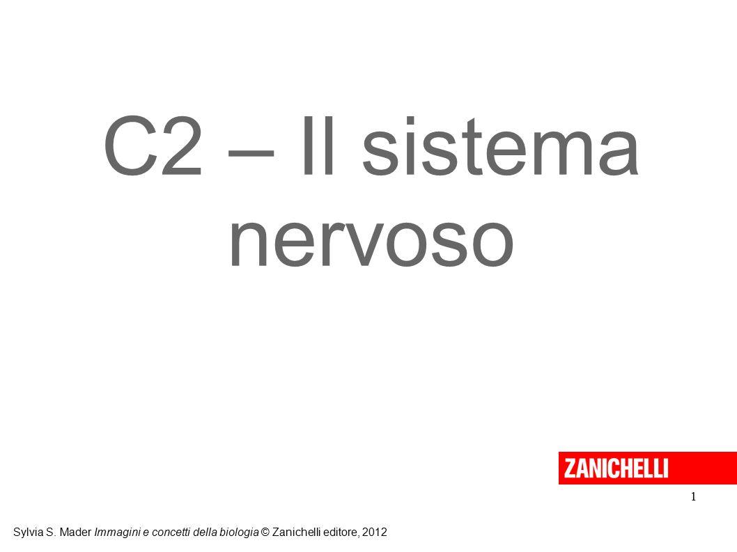 C2 – Il sistema nervoso Sylvia S.