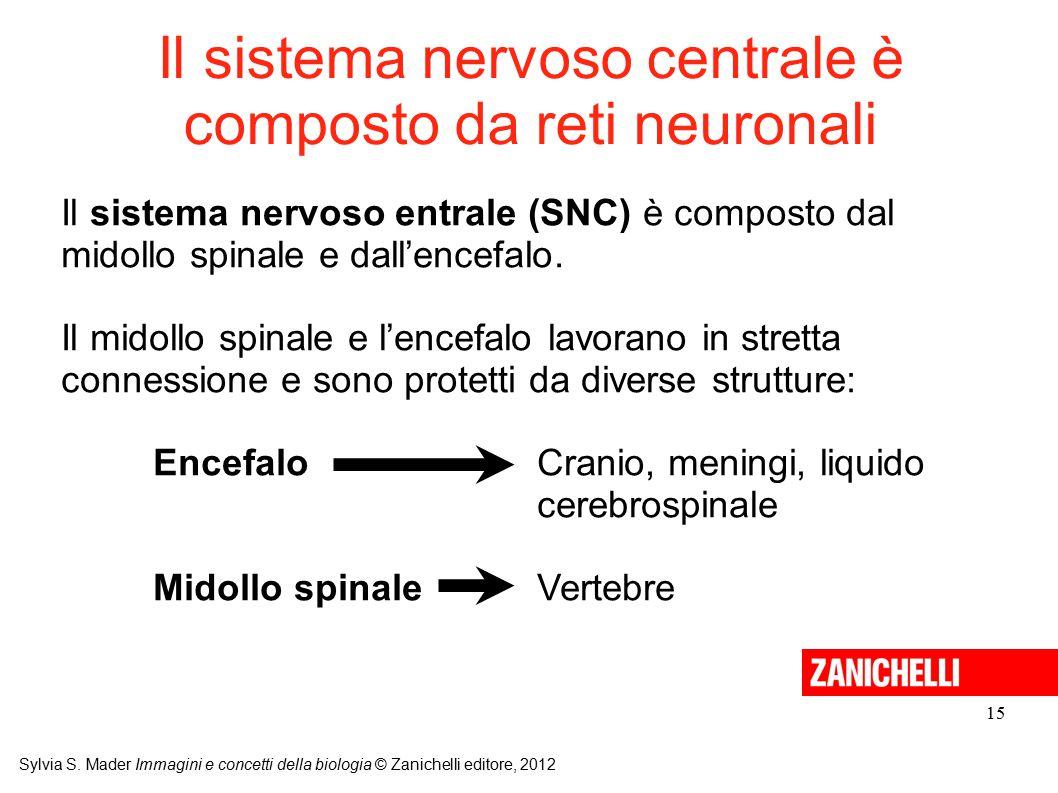 Il sistema nervoso centrale è composto da reti neuronali