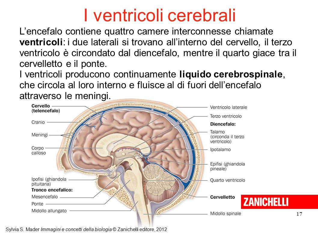 I ventricoli cerebrali