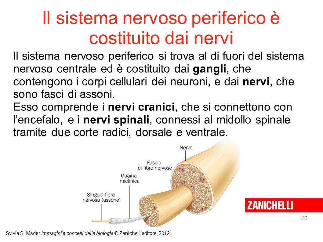 Il sistema nervoso periferico è costituito dai nervi