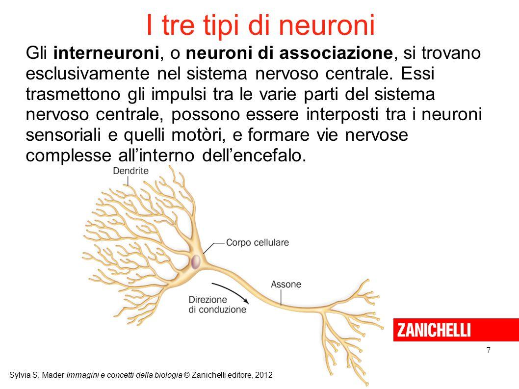 I tre tipi di neuroni