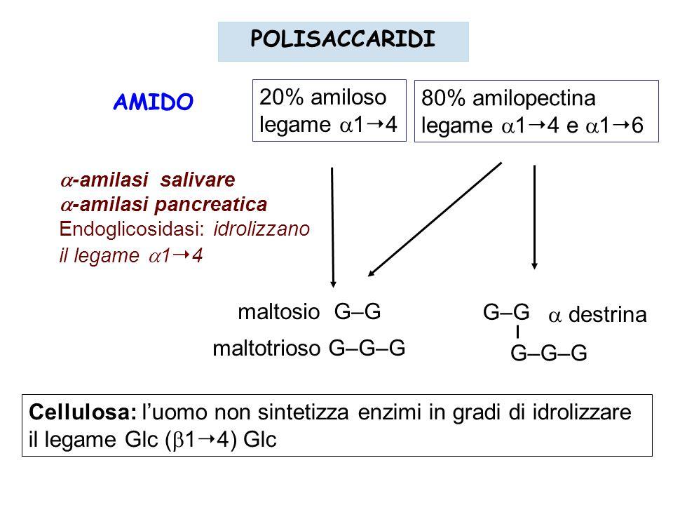 POLISACCARIDI 20% amiloso 80% amilopectina AMIDO legame 14