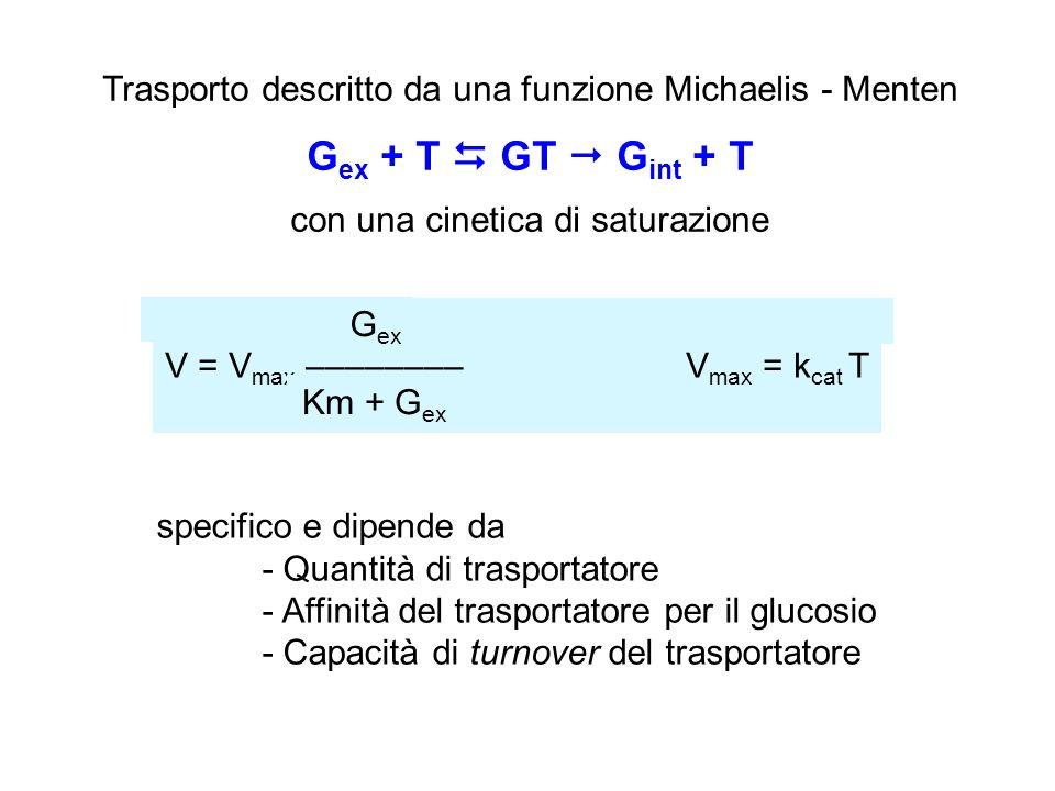 Trasporto descritto da una funzione Michaelis - Menten