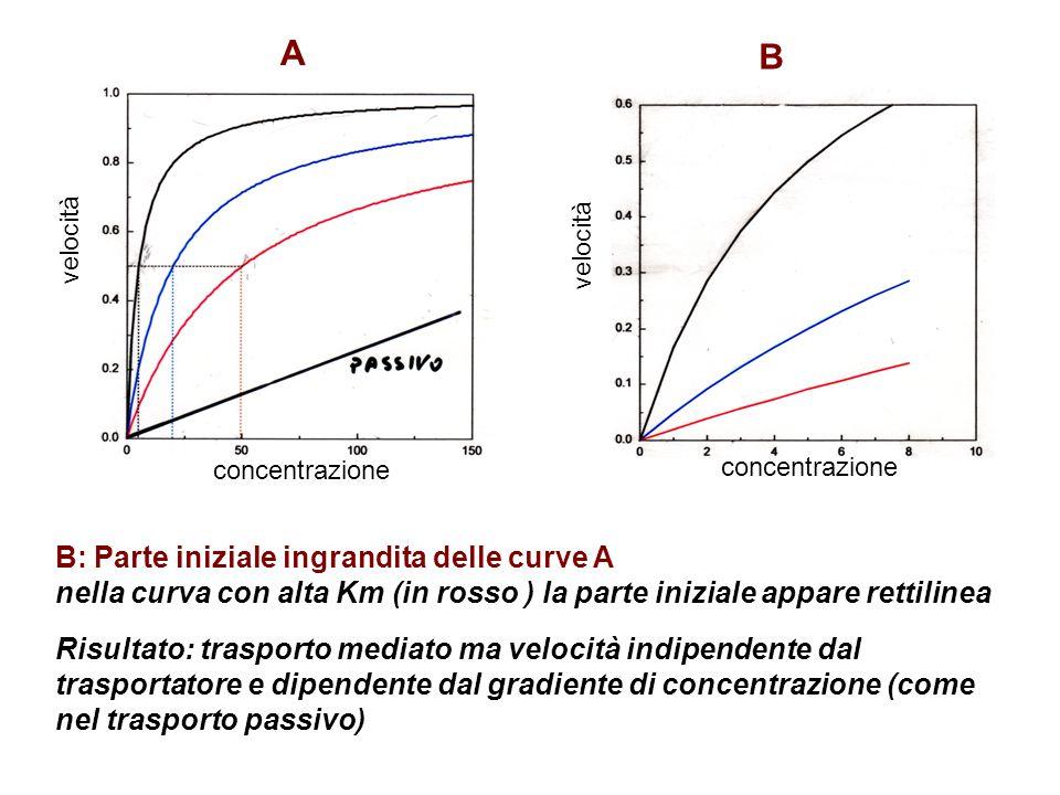 A B B: Parte iniziale ingrandita delle curve A