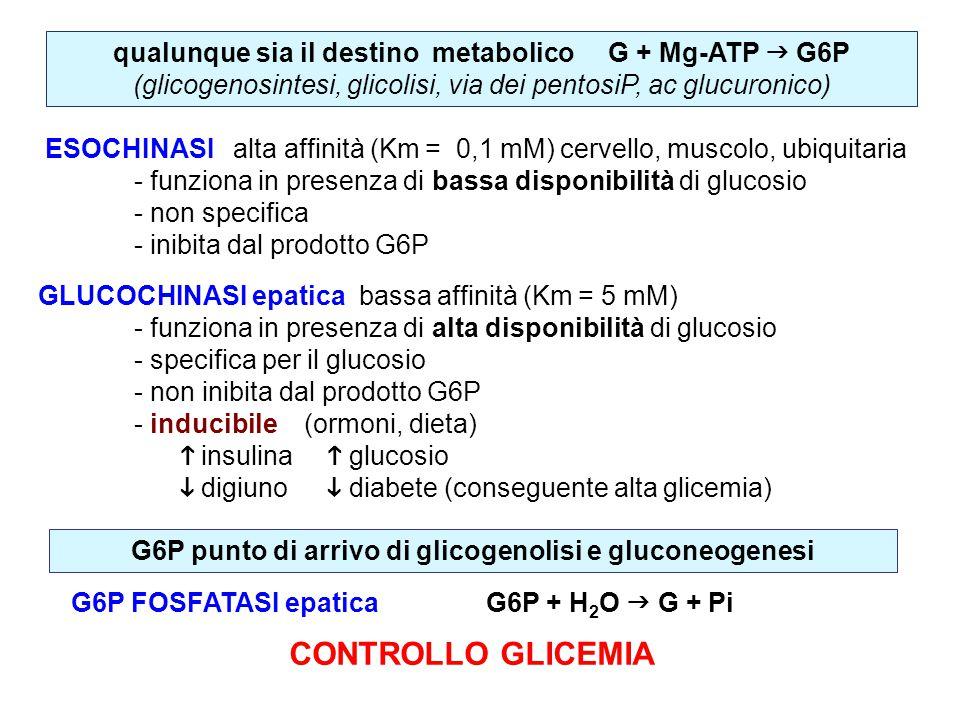 qualunque sia il destino metabolico G + Mg-ATP  G6P