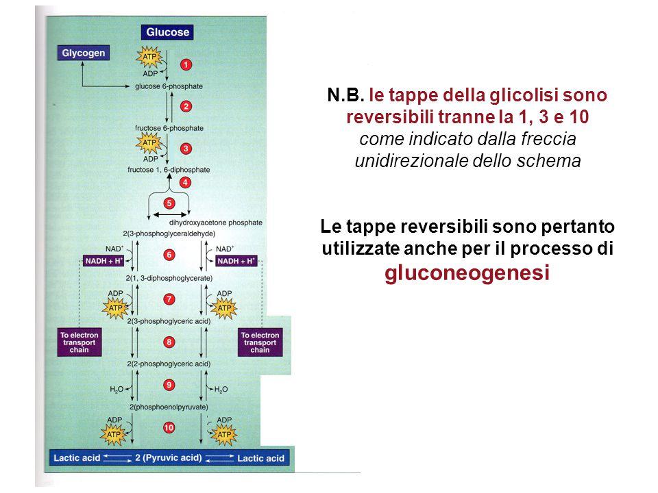 N.B. le tappe della glicolisi sono reversibili tranne la 1, 3 e 10
