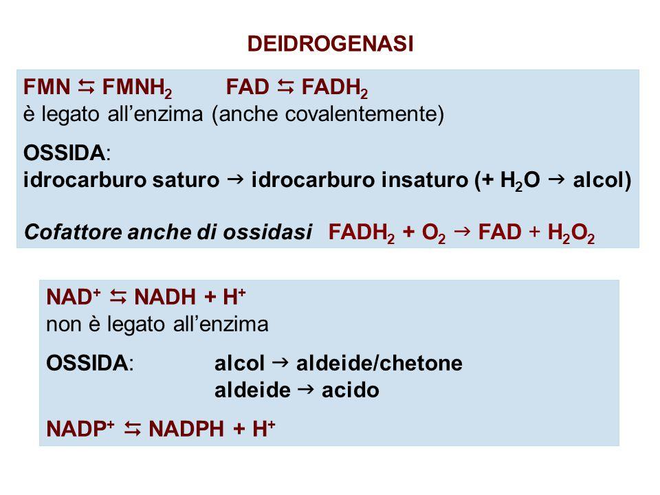 DEIDROGENASI FMN  FMNH2 FAD  FADH2. è legato all'enzima (anche covalentemente) OSSIDA:
