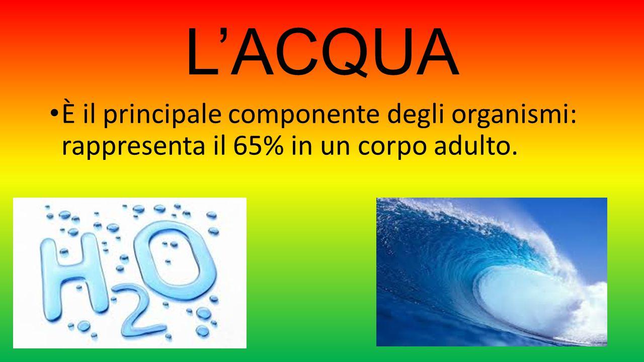 L'ACQUA È il principale componente degli organismi: rappresenta il 65% in un corpo adulto.